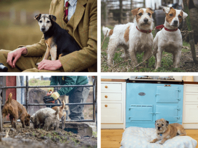 Terrier breeds: are they born anarchists?